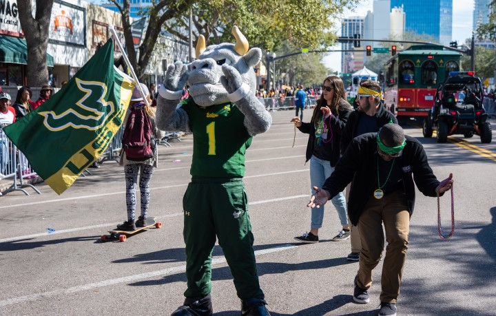 Rocky the Bull and USF students at a parade in downtown St. Petersburg