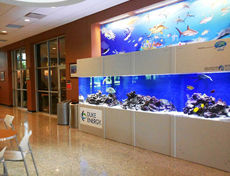 Fish aquarium in The Reef, USC